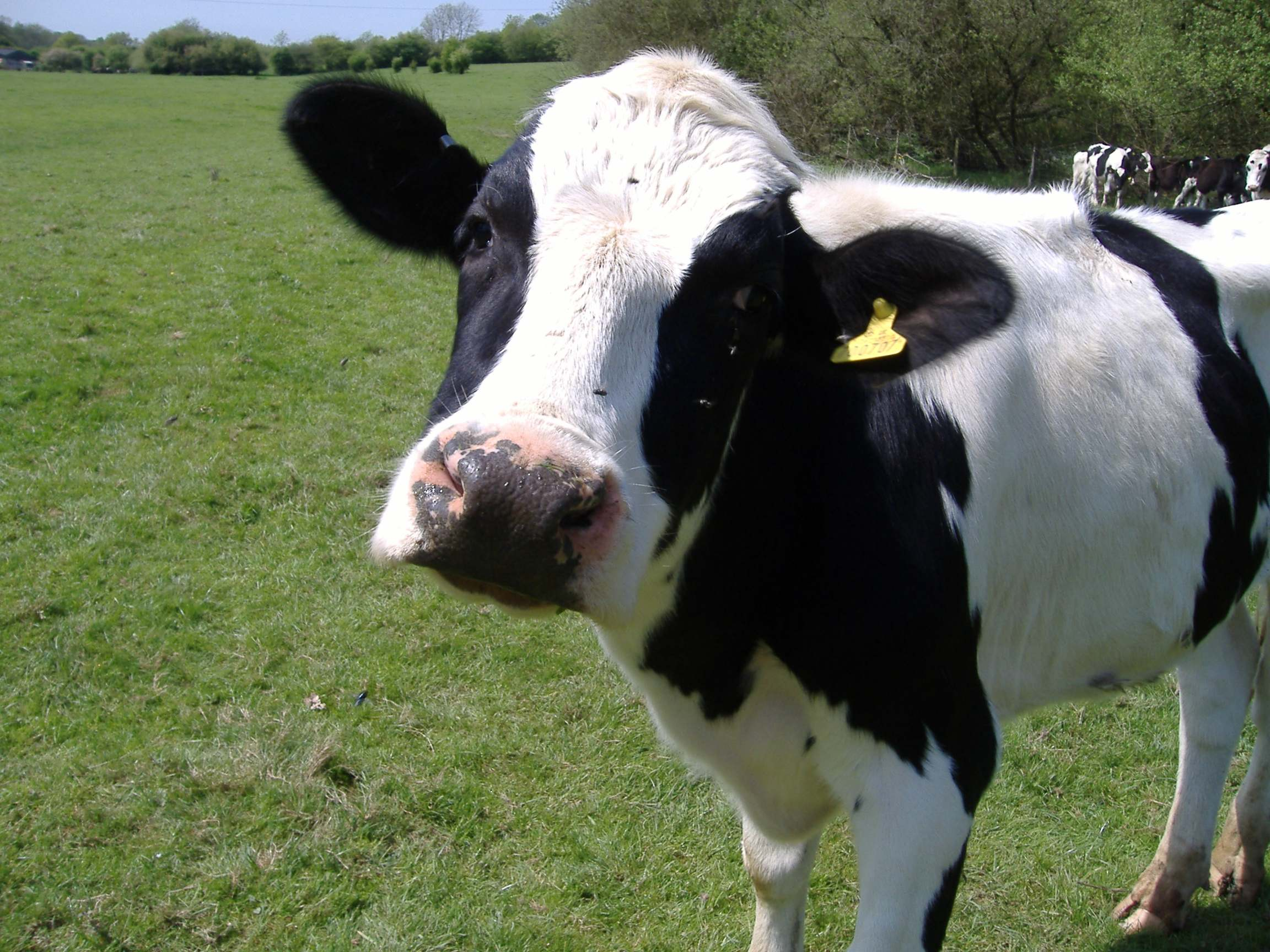 GPS контроль скота дает новые возможности прироста массы и сохранения скота